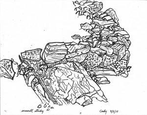 Sam Cady, Seawall Study