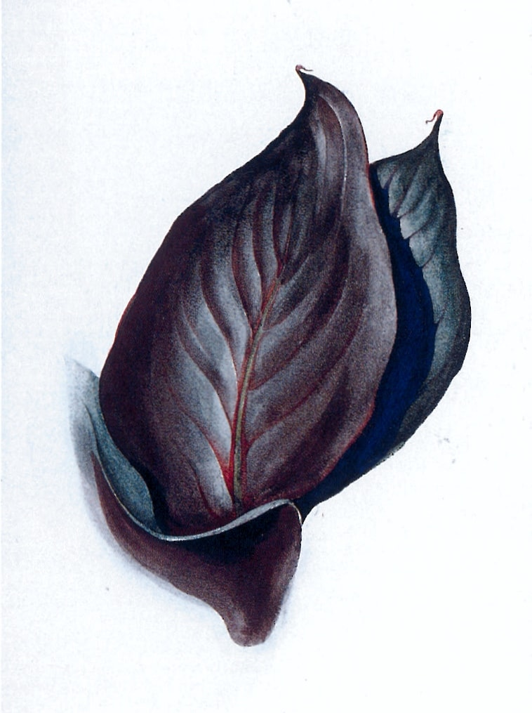 Georgia O'Keeffe, Special No. 38 (Canna Leaves)