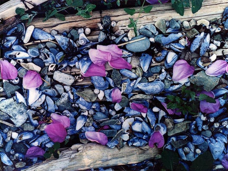 Eliot Porter (1901-1990) Rose Petals on the Beach, 1971