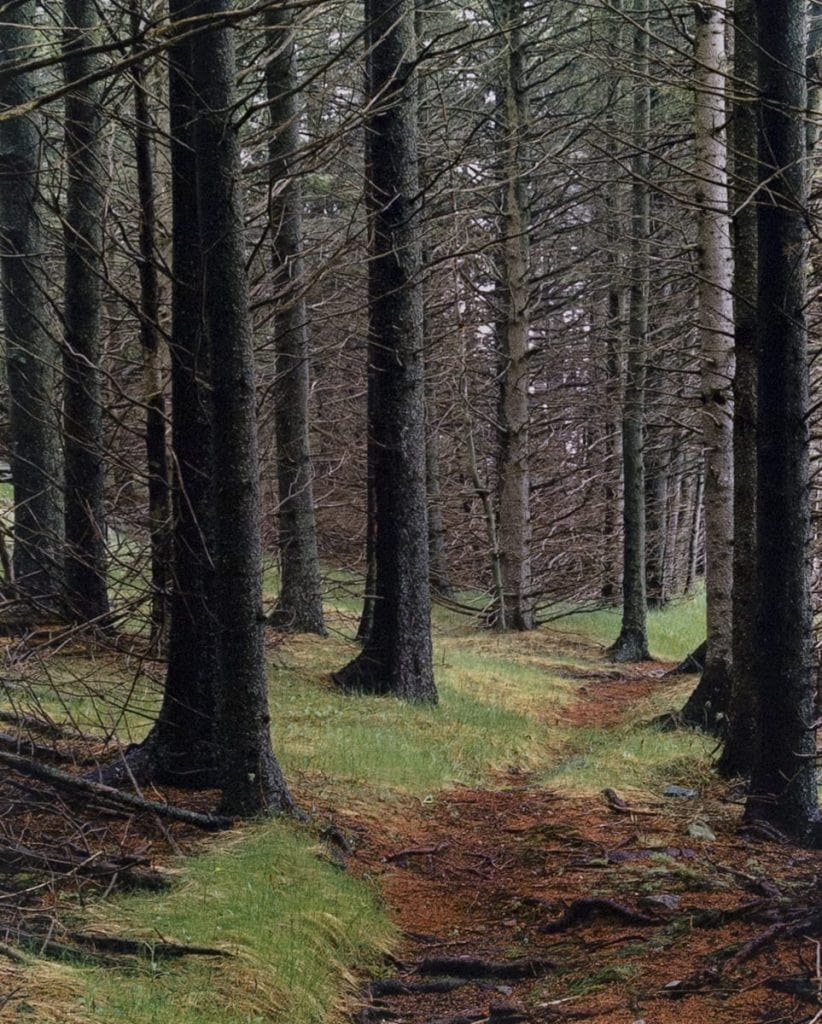 Elliot Porter, Path in Wood, Great Spruce Head Island, Maine, 1981, 16 x 12-3/8 in. 2017.18.2