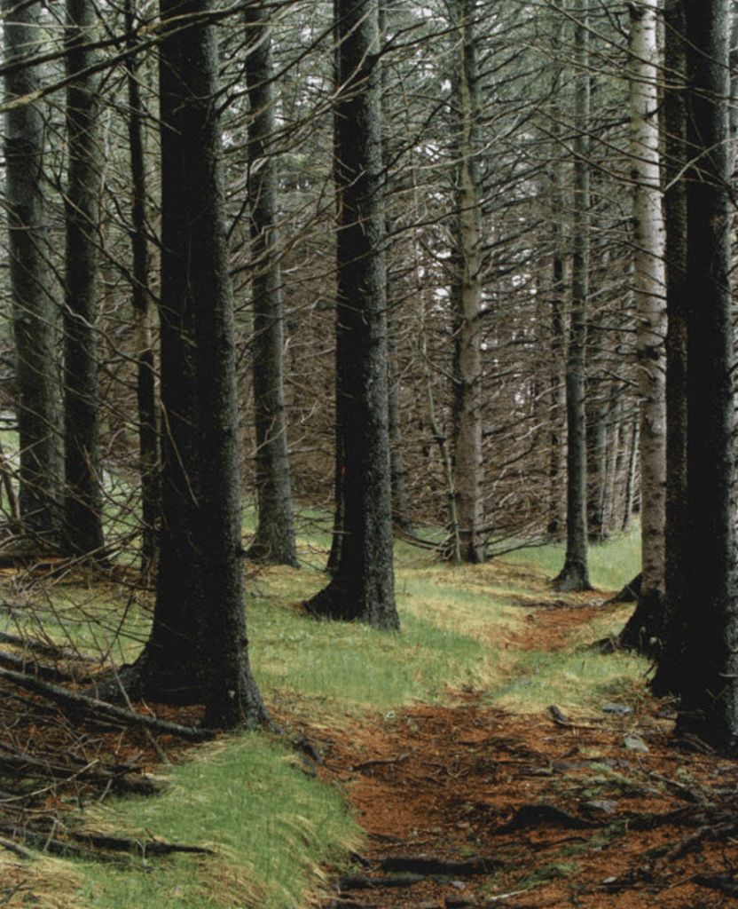 Eliot Porter, Path in Wood, Great Spruce Head Island, 1981, Dye transfer print, Museum Purchase with support from Friends of the Farnsworth Collection, 2017.18.2